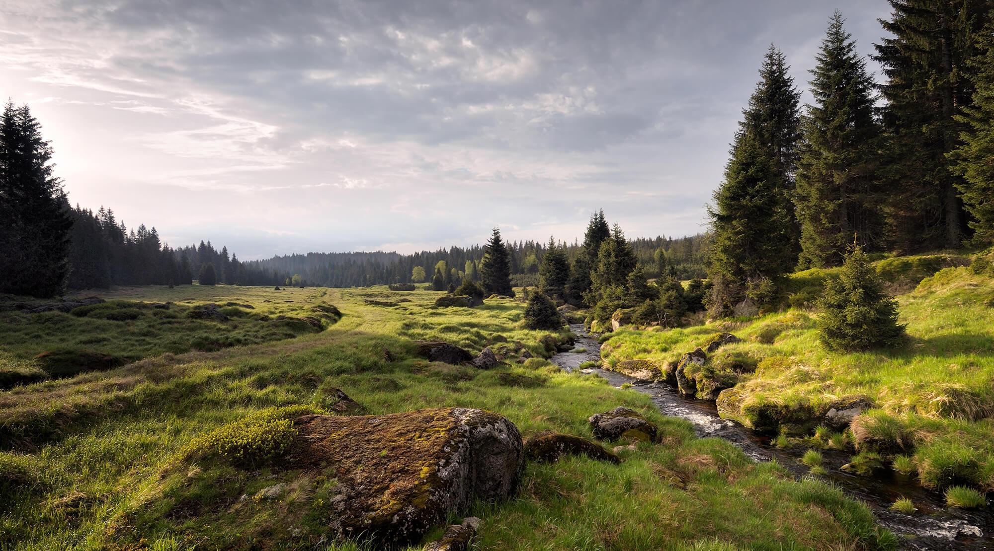 Urwald In Europa