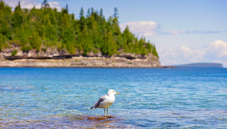 Der Bruce-Peninsula-Nationalpark erwartet Wanderer mit seinen dichten Wäldern, steilen Felsen und türkisfarbenem Wasser