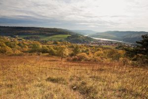 Blick übers Tal der Mosel