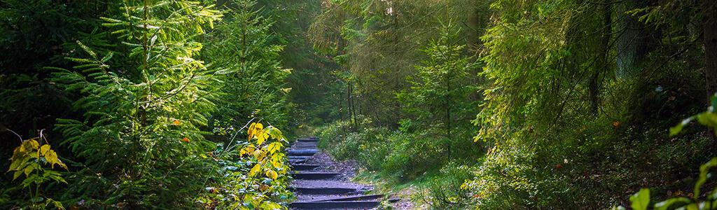 Waldbaden: auf einem Weg durch den Wald