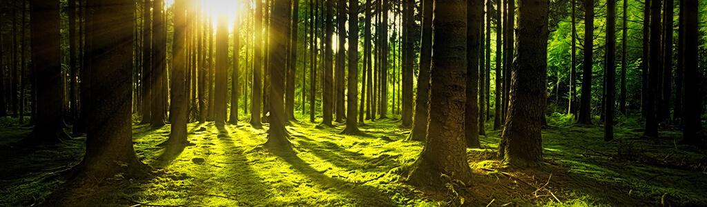 Waldbaden im sonnendurchfluteten Wald