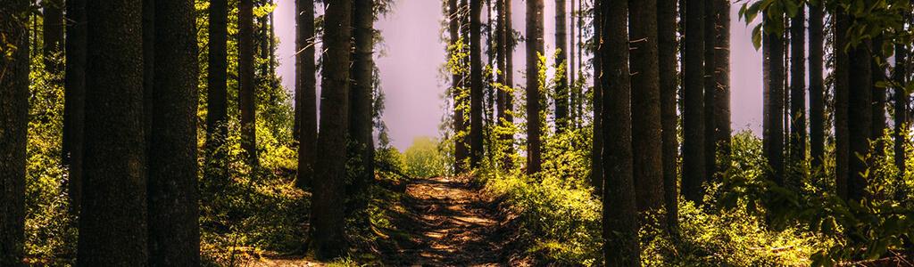 Waldweg durch Wald mit Sonnenstrahlen