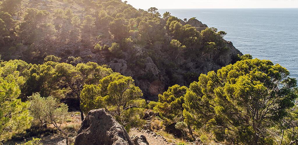 Schmugglerpfad: Ausblick auf die Küste Mallorcas