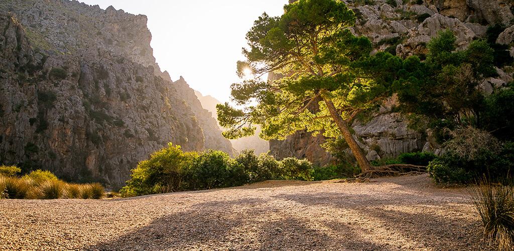 Sonnenaufgangsstimmung in der berühmten Schlucht Torrent de Pareis