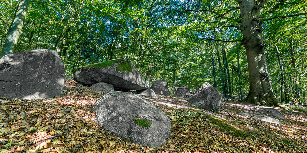 Laubwald mit großen Felsen