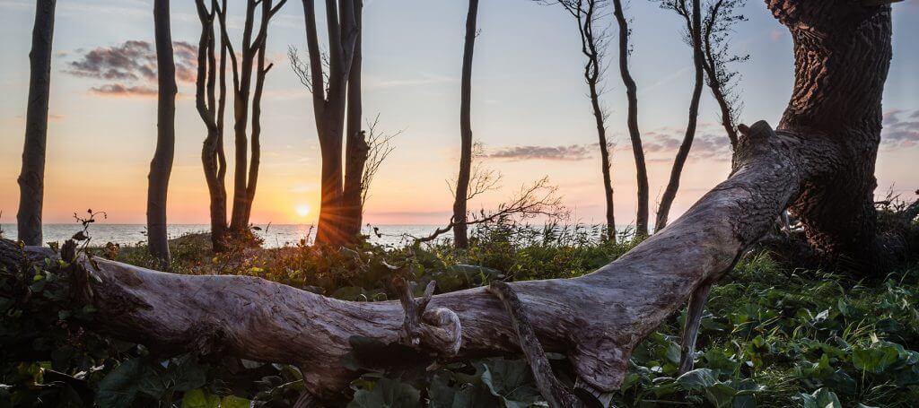 Blick aus dem Wald auf's Meer in der Rostocker Heide