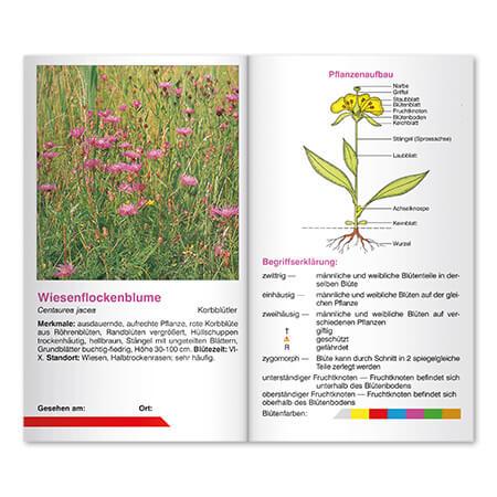Naturführer Innenseiten Blumen