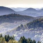 Blick über den Pfälzerwald, aufsteigender Nebel